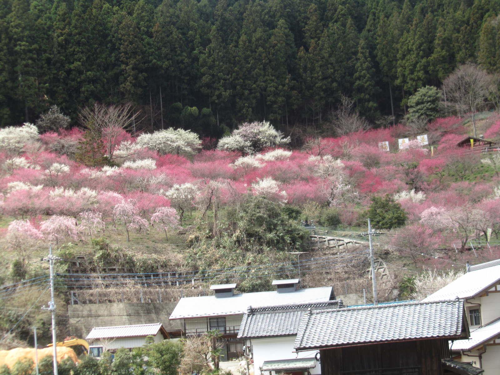 20140404_hukujyusounosato.JPG