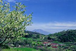 神津牧場(遠景)