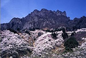 桜の里と妙義山